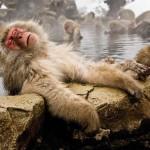 japan-hot-spring